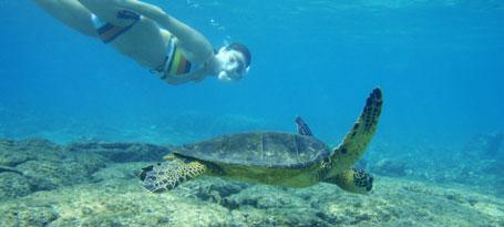 Molokai reef snorkel tour photo albumn snorkel molokai for Molokai fish and dive